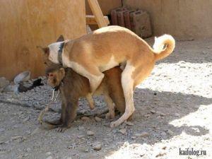 Приколы про собак. Часть-3