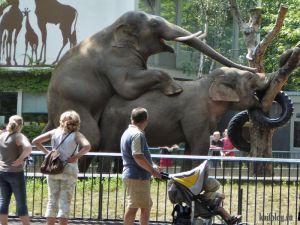 Приколы про слонов. Часть-3