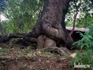 Прожорливые деревья