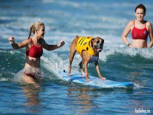 Животный серфинг