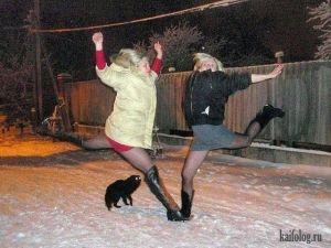 Одноклассники коты
