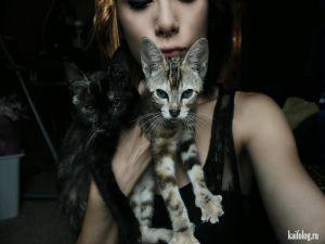 Металлисты с котами