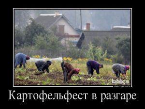 Русские демотиваторы - 207