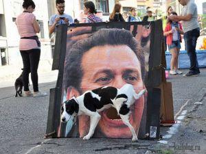 Собачьи стоп-кадры