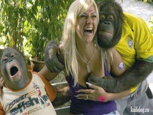 Дарвин был прав или человек произошел от обезьяны