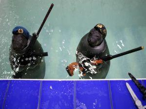 Наш ответ  морским котикам
