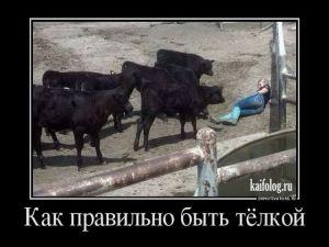 Демотиваторы о России - 239