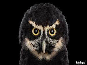 Портреты животных и птиц