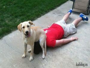 Наглые собаки