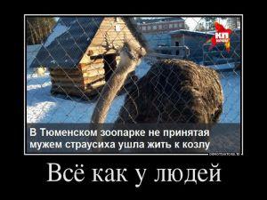 Прикольные демотиваторы по-русски - 263