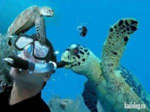 Фото черепах в День Черепахи