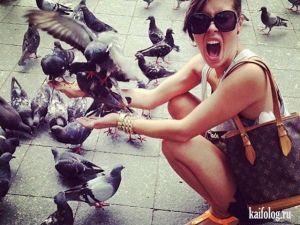 В России любят птиц