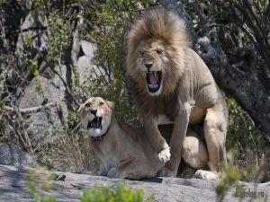 Фото приколы про животных