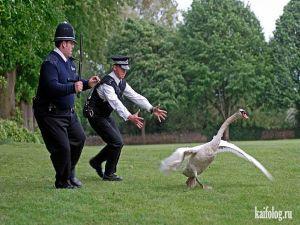 Приколы про полицию и животных