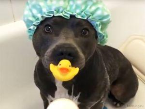 Прикольные видео про собак