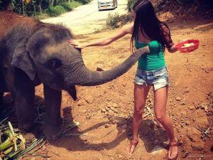 День слонов