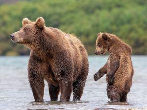 Дикая природа России 2019
