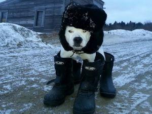 Эти животные уже готовы к зиме