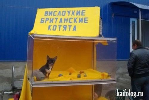 Чисто русские фото. Подборка-5 (50 фото)