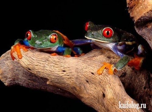 Разноцветные лягушки (11 фото)