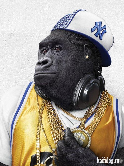 Неформальные обезьяны (4 фото)
