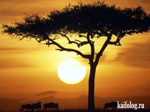 Красоты африки (20 фото)