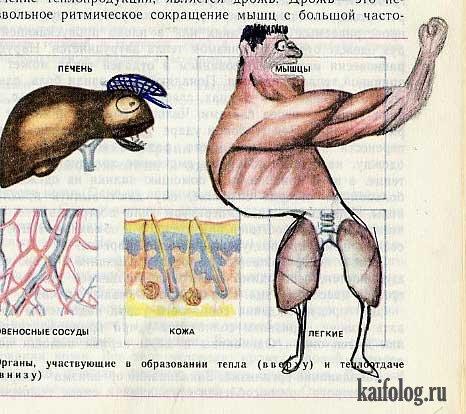 Рисунки в школьном учебнике по биологии (20 сканов)