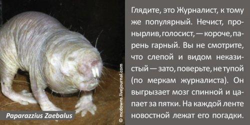 Позитив на пятницу. Сетятам о зверятах (11 фото)