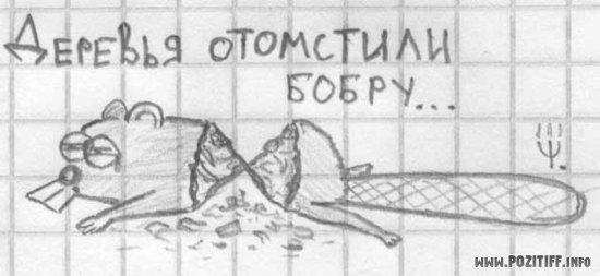 Как рисовать морду волка поэтапно карандашом для начинающих