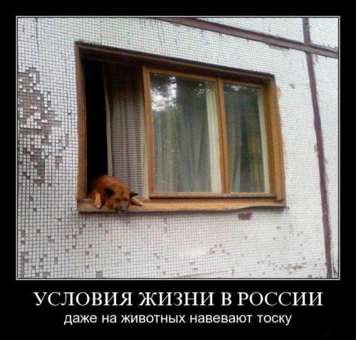 Чисто русские демотиваторы-6 (90 фото)