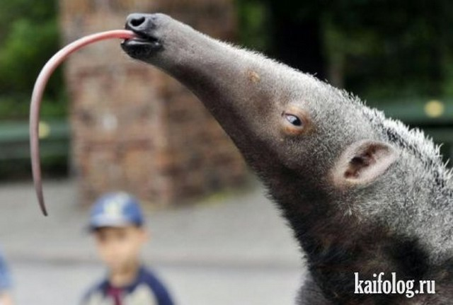 Прикольные и позитивные фото из зоопарка (30 фото)
