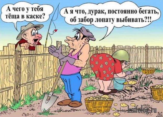 Боянистые анекдоты в карикатурах (25 картинок)