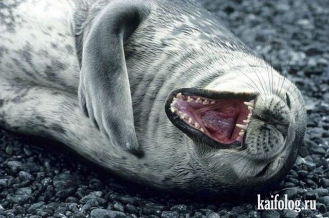 Приколы про тюленей (20 фото + видео)