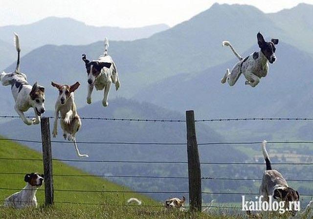 Животные стоп-кадры (35 фото)
