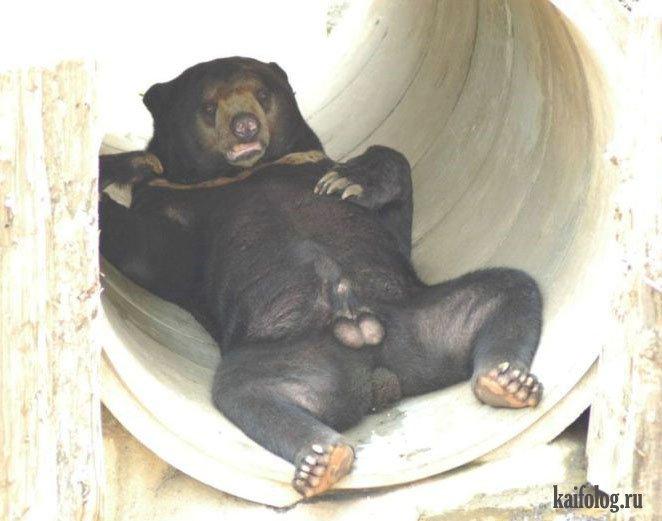 приколы фото медведь:
