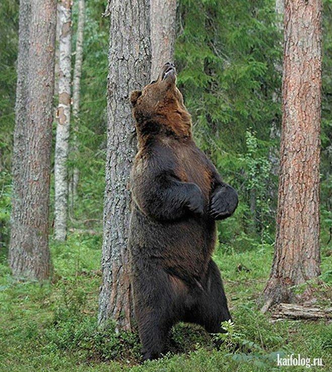 Приколы про медведей 30 фото