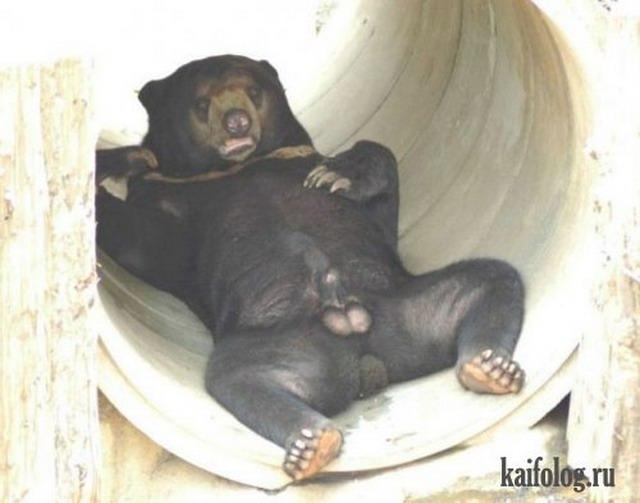 Приколы про медведей (30 фото)