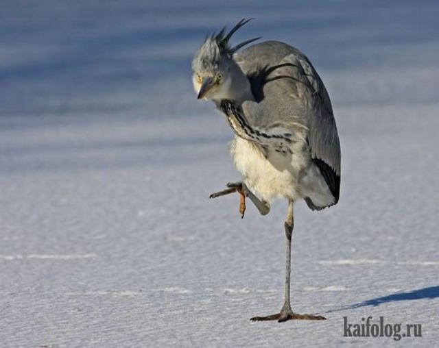 Птицы с бодуна (35 фото)