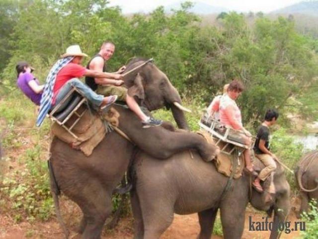 Приколы про слонов (40 фото)