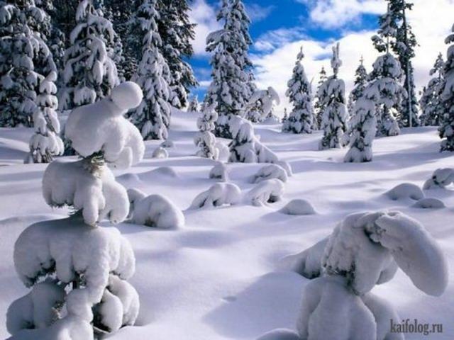 Зимний позитив (50 фото)