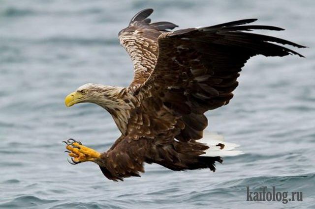 Приколы про птиц (35 фото)