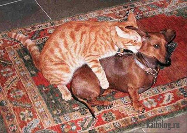 Озабоченные животные. Часть-3 (35 фото)