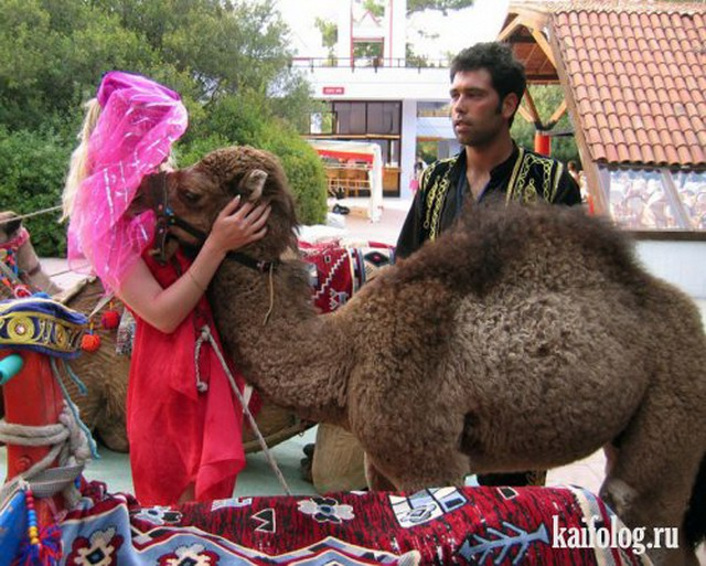 Приколы про верблюдов (40 фото)