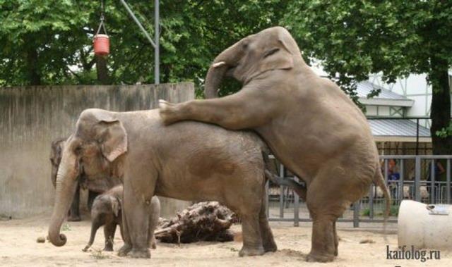 Приколы про слонов. Часть-2 (40 фото)