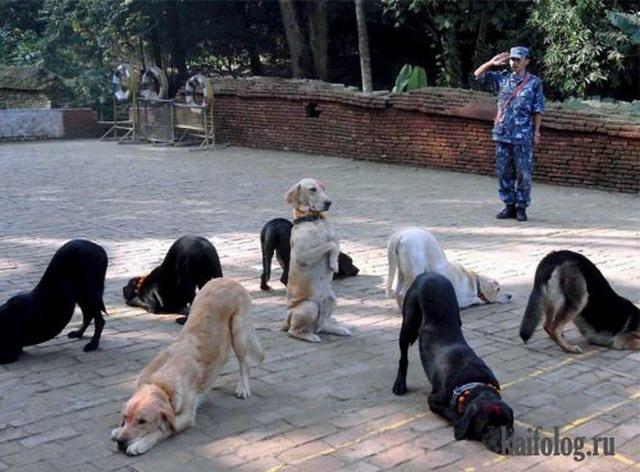 Приколы про собак. Часть-3 (35 фото)