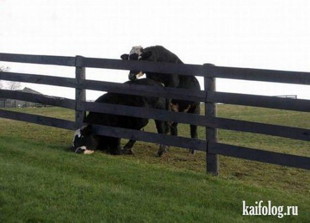 Застрявшие животные (30 фото)