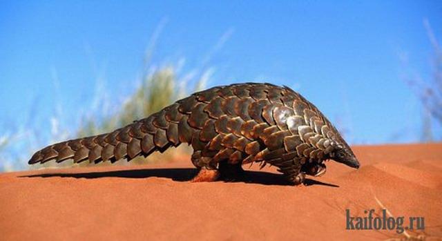 Очень странные животные нашей планеты (50 фото)