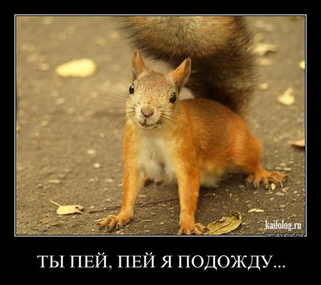 Демотиваторы - 97 (40 фото)