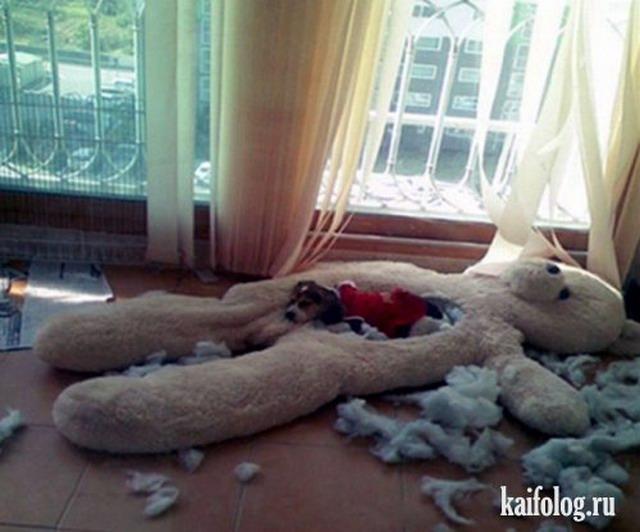 Приколы про собак. Часть-4 (50 фото)