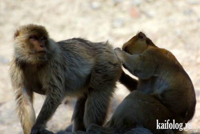 Озабоченные животные. Часть-4 (35 фото)